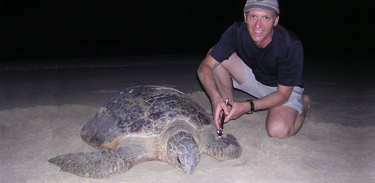 Silent Reef founder and course author David Roe tags a nesting sea turtle on Milman Island, Great Barrier Reef Marine Park, Australia.